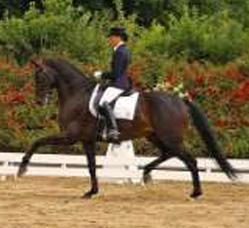 ehemalige-erfolgspferde-shocoman