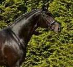 ehemalige-erfolgspferde-sonnenkoenig